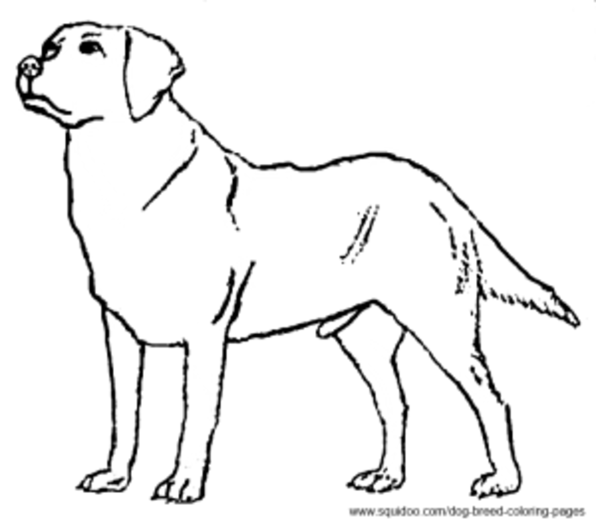 Black Lab Face Coloring Pages