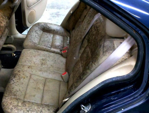 Treat And Prevent Mold And Mildew In Home And Cars