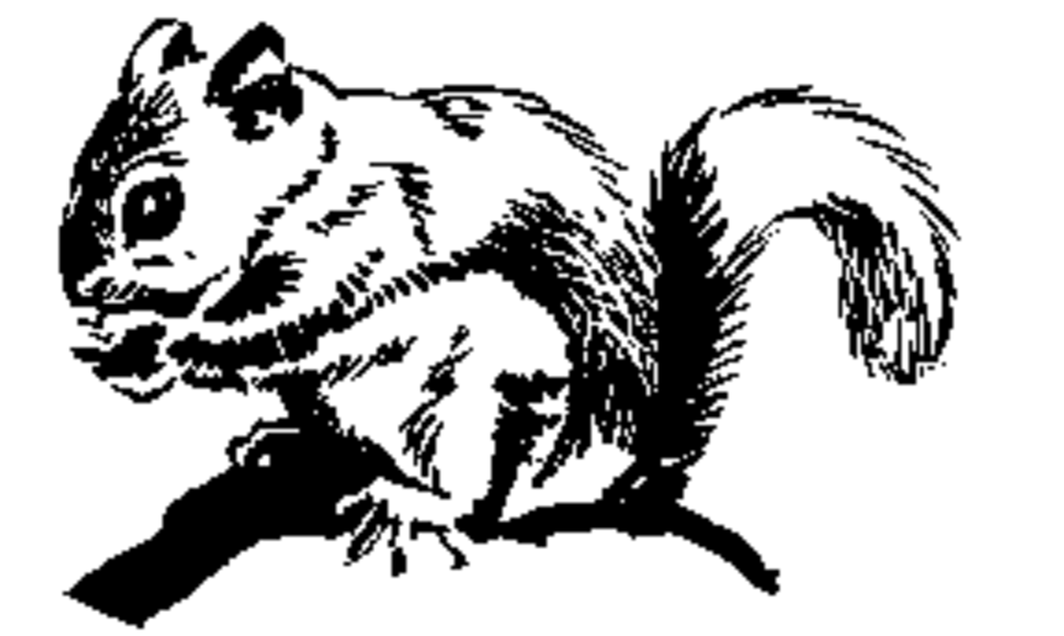 Clip Art Squirrels Brown Black And White
