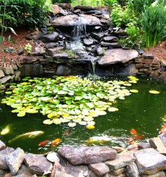 how to make a beautiful goldfish pond [ 1024 x 768 Pixel ]
