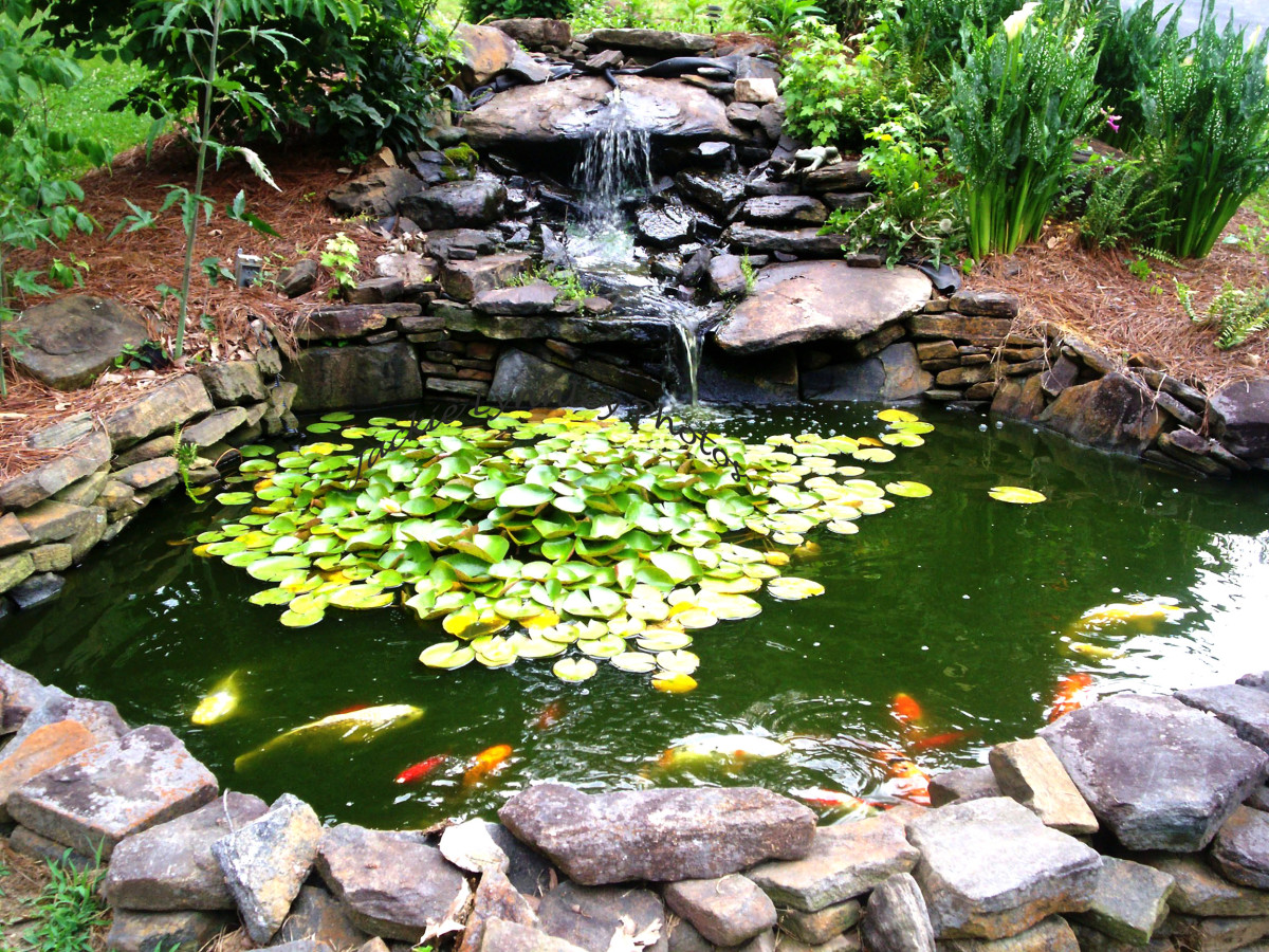 hight resolution of how to make a beautiful goldfish pond