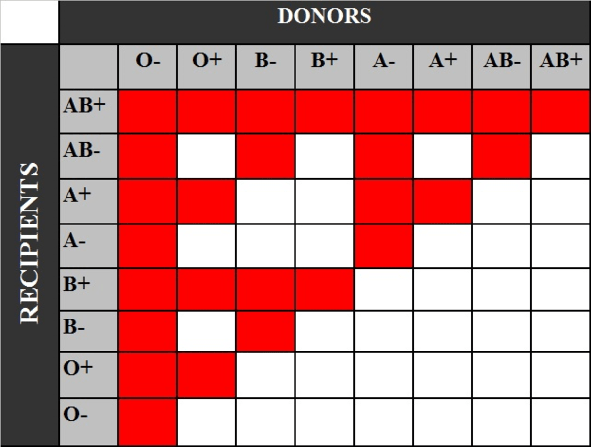 The ABO Blood System and the Most Common Blood Type ...