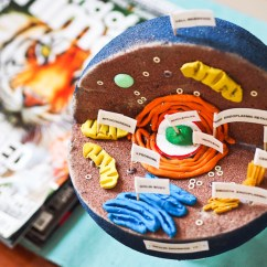 Animal Cell Diagram And Labels 1997 Honda Civic Si Stereo Wiring How To Create 3d Plant Models For Science Class Source