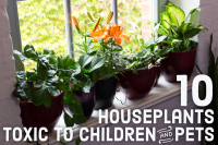 10 Toxic Houseplants That Are Dangerous for Children and