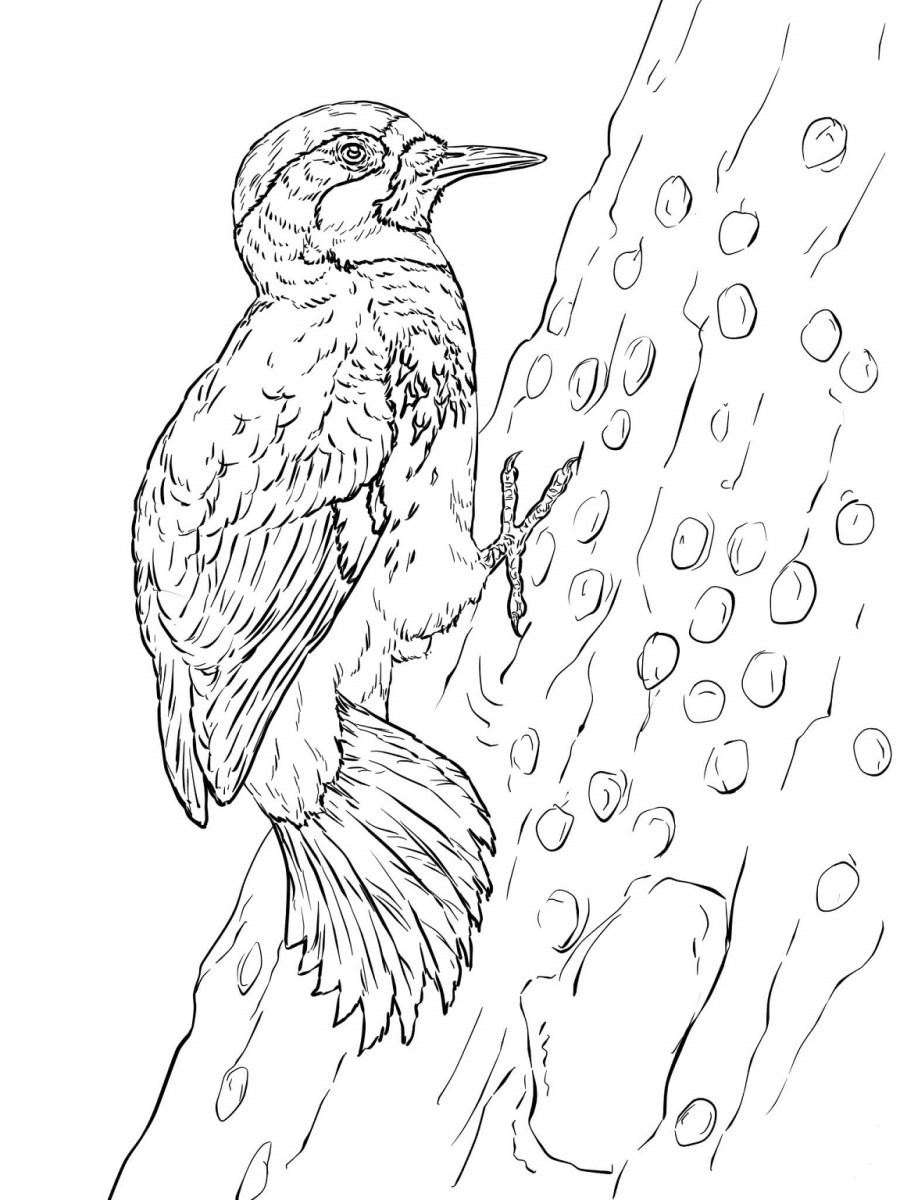 Backyard Animals and Nature Coloring Books Free Coloring