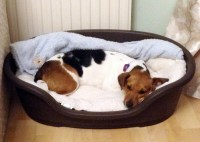 How to Choose a Good Dog Bed