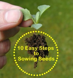 gardening for beginners 10 easy steps to sowing seeds [ 1024 x 1193 Pixel ]