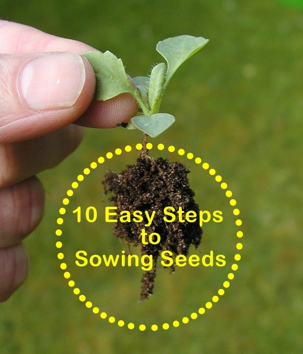 medium resolution of gardening for beginners 10 easy steps to sowing seeds
