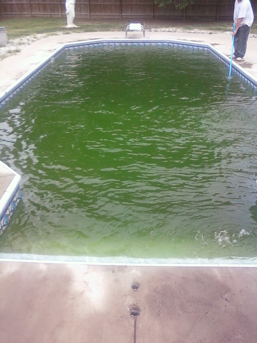 How To Get Rid of Algae In Pool Without Chemicals ...