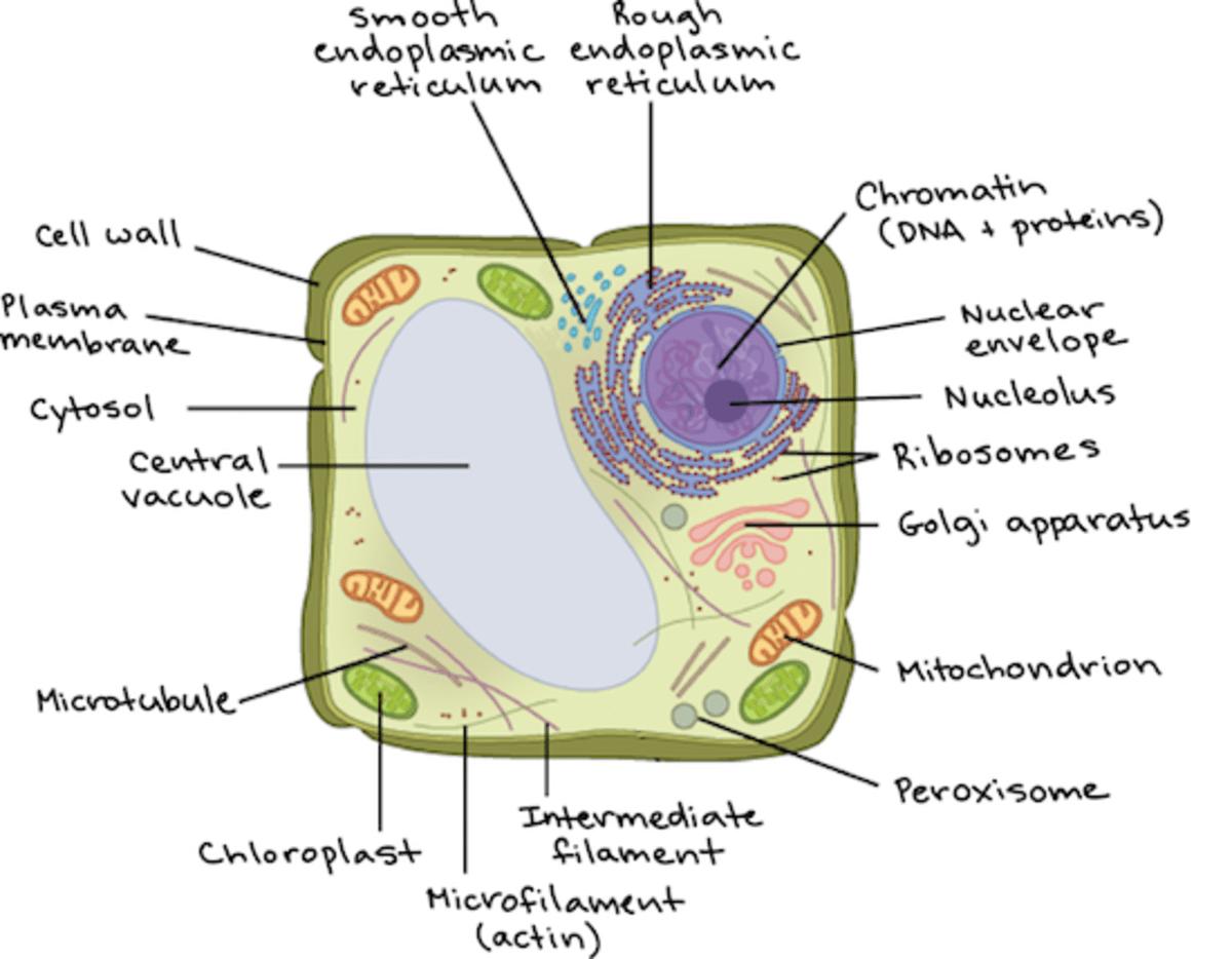 Biology 101 Cells