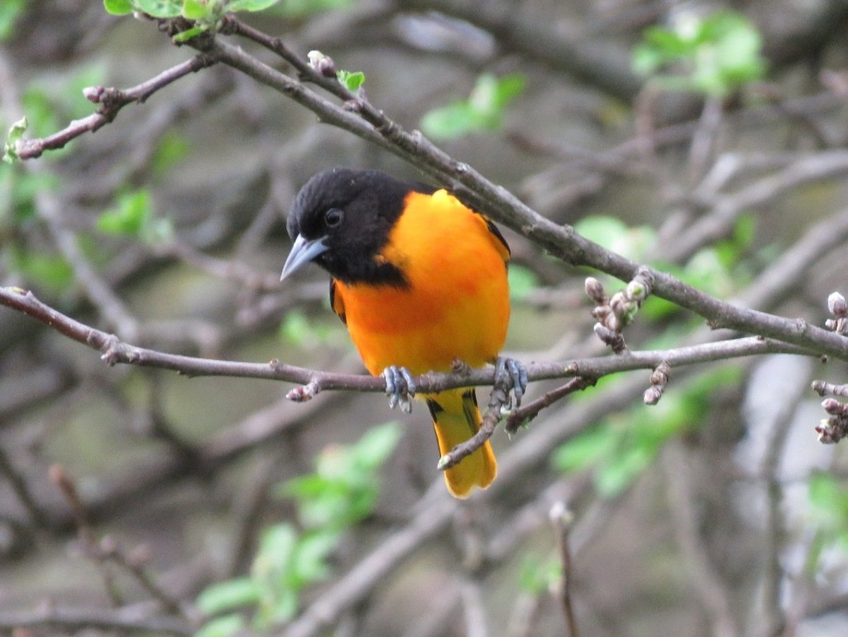 Common Types Of Backyard Birds In The Northeast