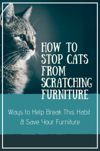 How to Stop Cats From Scratching Furniture | PetHelpful