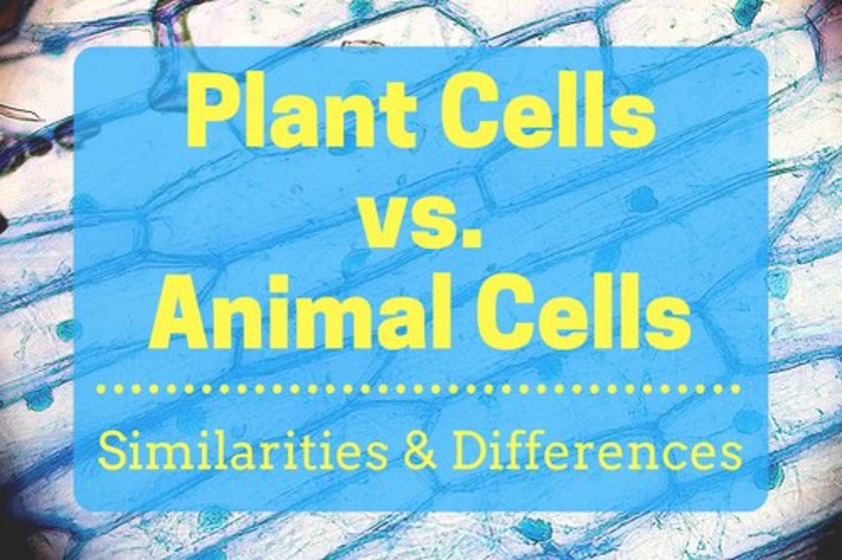 onion cell diagram yamaha virago wiring plant cells vs animal with diagrams owlcation