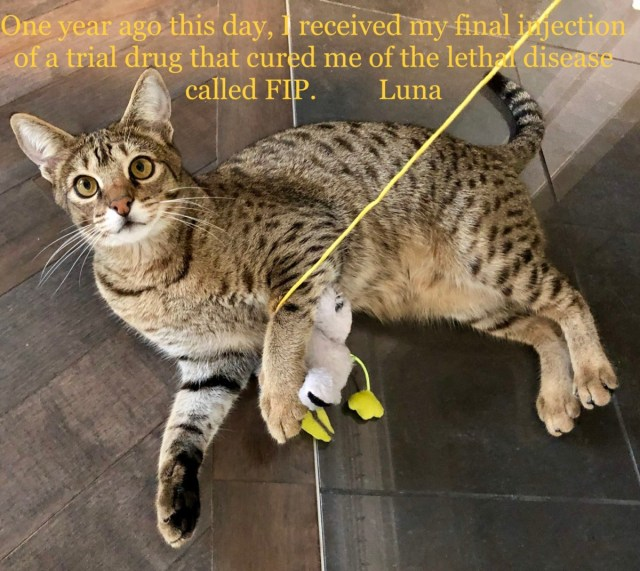 Photo of Luna One Year Free From FIP