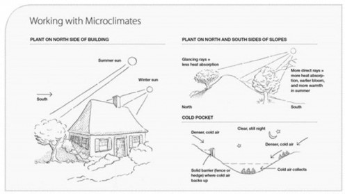 How to Recognize and Manage Your Yard's Microclimates for