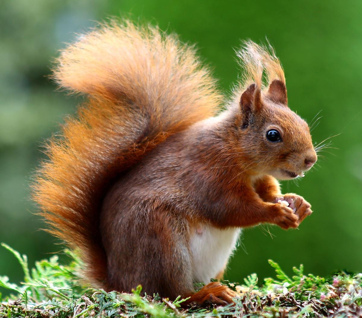 the best squirrel names