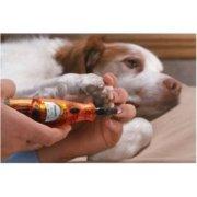 make dog's nail quick