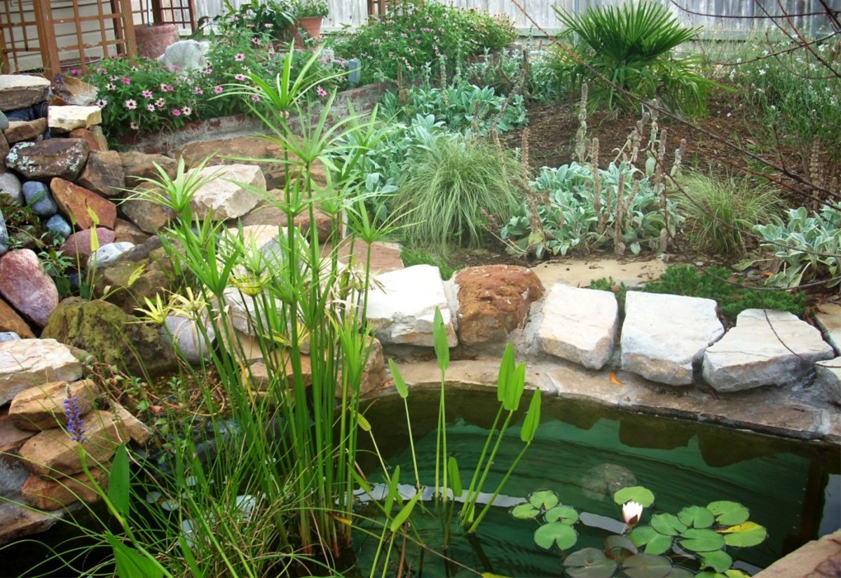 Plastic Large Plants Pond