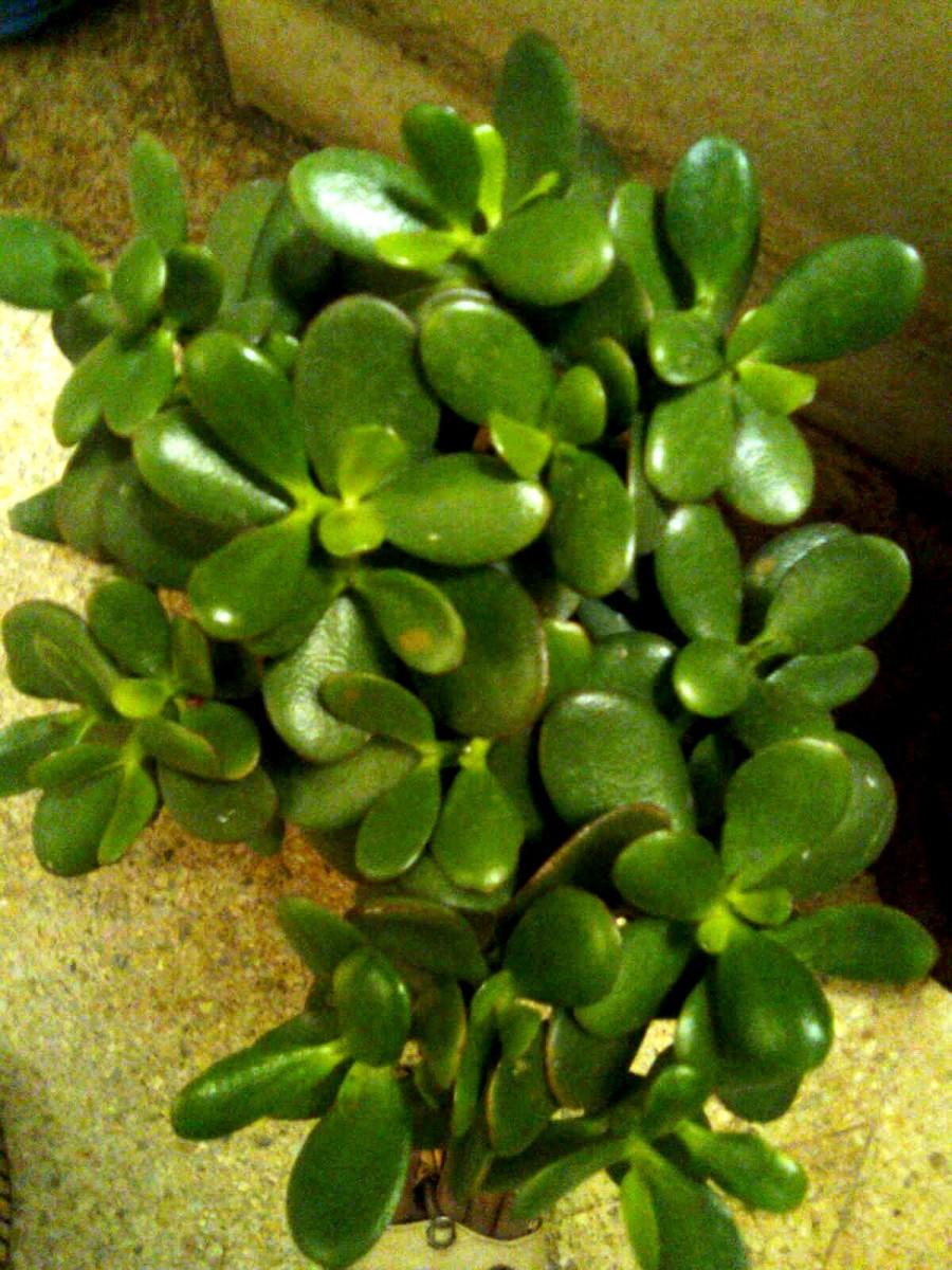 Easy Grow Indoor Plants