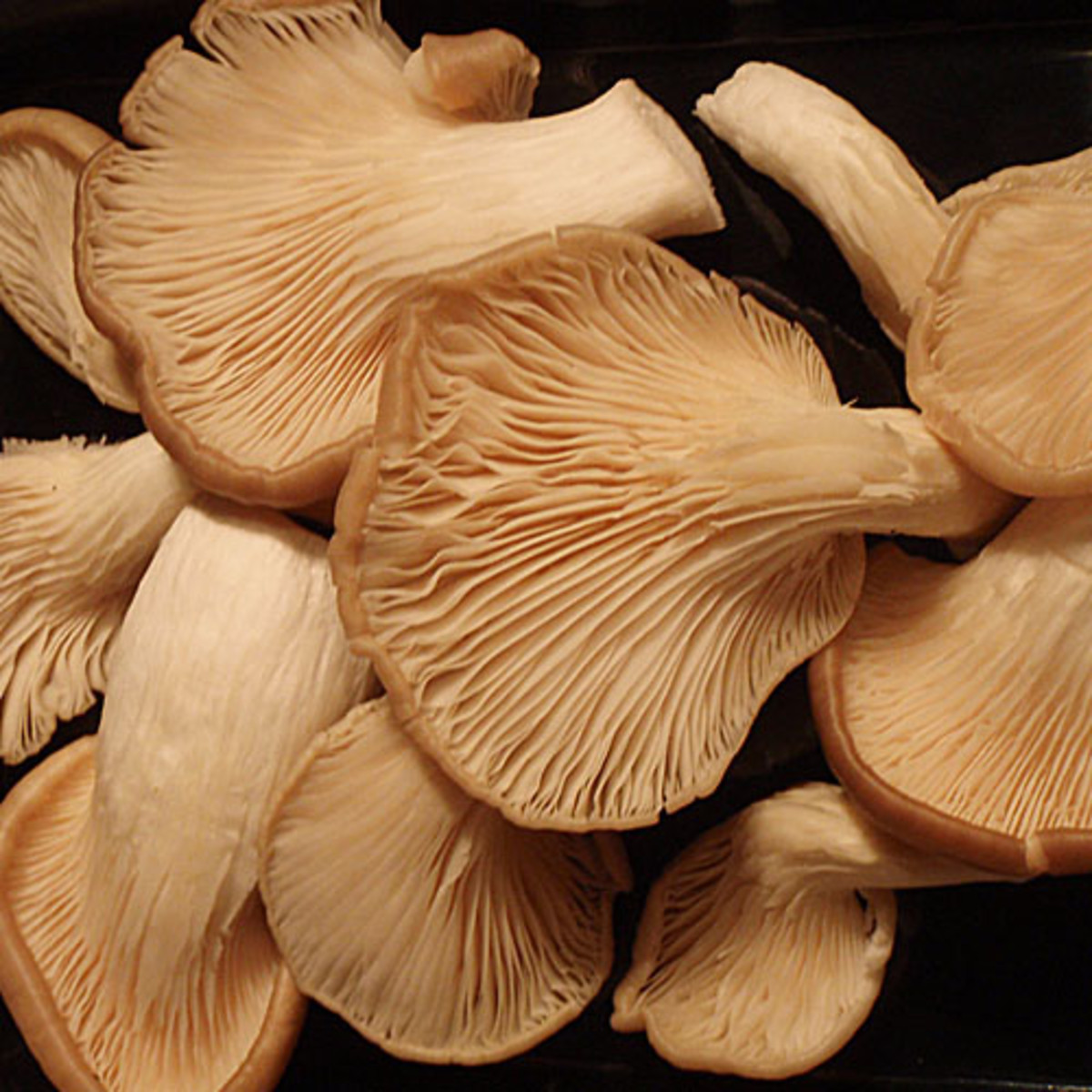 What Are the Different Types of Edible Mushrooms and How ...