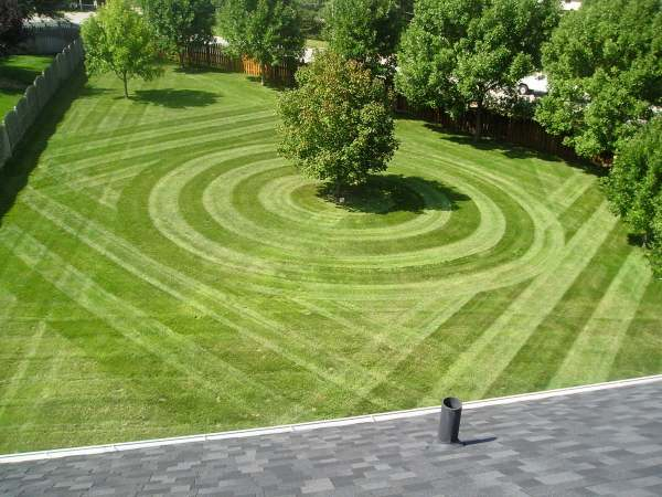 top reasons lawn care businesses