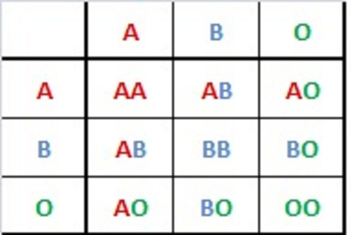 Blood Types History Genetics And Percentages Around The