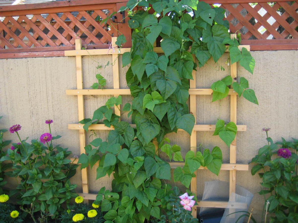 Easy Vertical Gardening Ideas For Beginners Dengarden