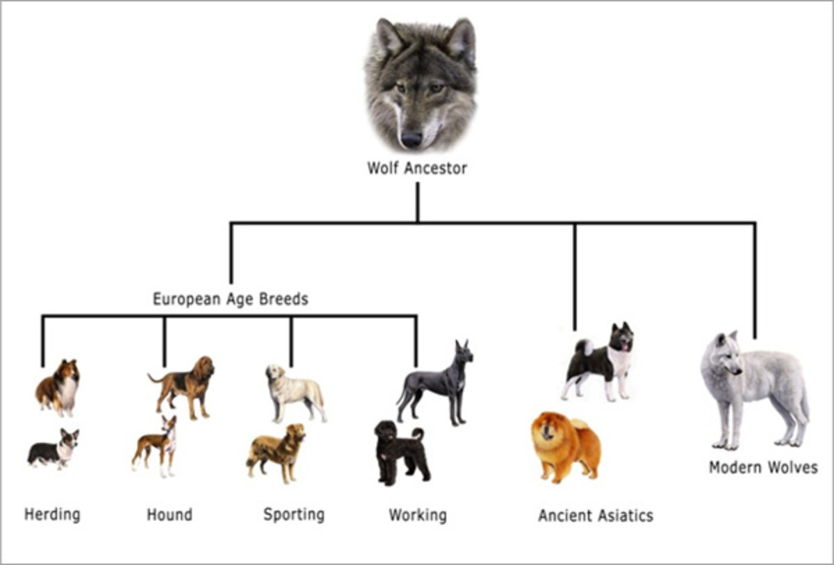 Common Dog Health Problems Caused by Selective Breeding