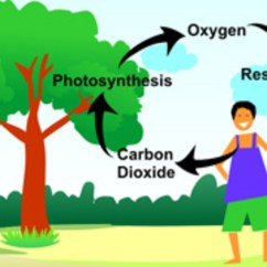 Animal Respiration Simple Diagram Sorting Venn Cycle Of Carbon, Nitrogen, Oxygen And Hydrogen | Hubpages