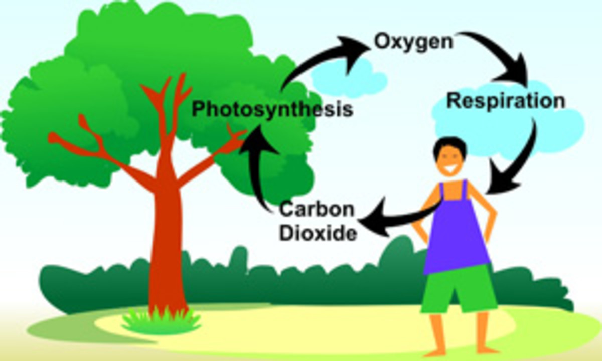 how do i draw a family tree diagram pioneer deh 2200ub wiring cycle of carbon, nitrogen, oxygen and hydrogen | hubpages