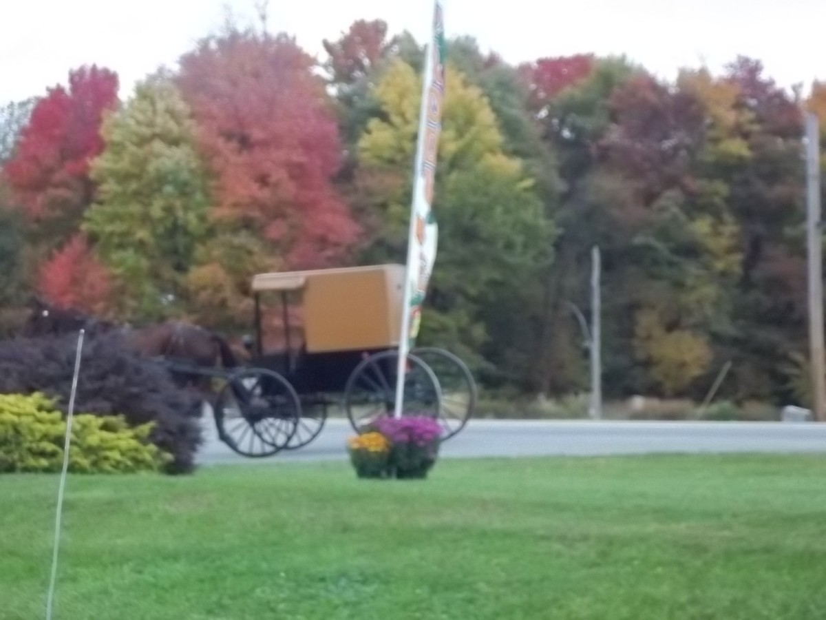 amish communities in western