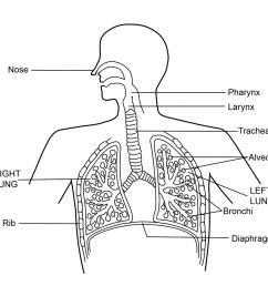 what is the respiratory system diagram and function [ 1024 x 991 Pixel ]