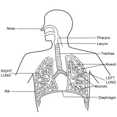 Diagram Of The Nose And Its Functions Three Phase Energy Meter Wiring What Is Respiratory System Function Hubpages