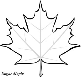 leaf coloring printable pages