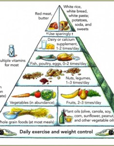 Harvard   food pyramid also difference between  chain web and energy rh owlcation