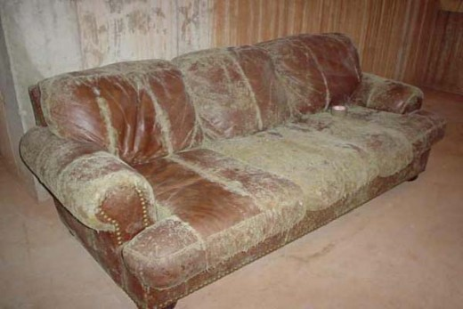 fuzzy sofa what size sheets fit a sleeper white mold in basement or something else? | hubpages