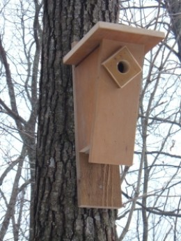 Bluebird Nest Box Plans How To Build A Peterson Bluebird House  Slant Front Style  HubPages