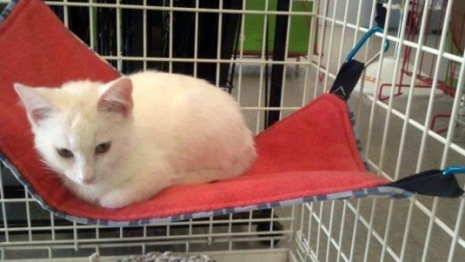 under chair cat hammock queen anne covers amazon hammocks for cats - | pethelpful
