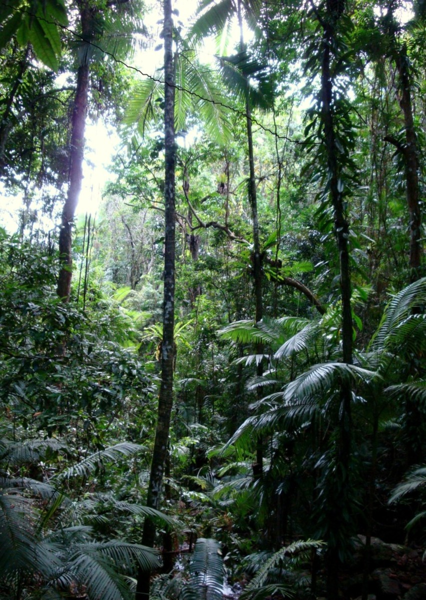 Biological Communities Symbiosis Niches And Biomes