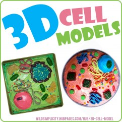 Plant Cell Diagram Project 700r4 Speed Sensor Wiring 3d And Animal Models