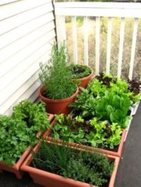 Your Balcony Garden | Dengarden