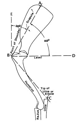 dog hind leg diagram nissan xterra about the front assembly
