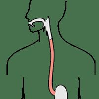 Digestive System Analogy Assessment on emaze