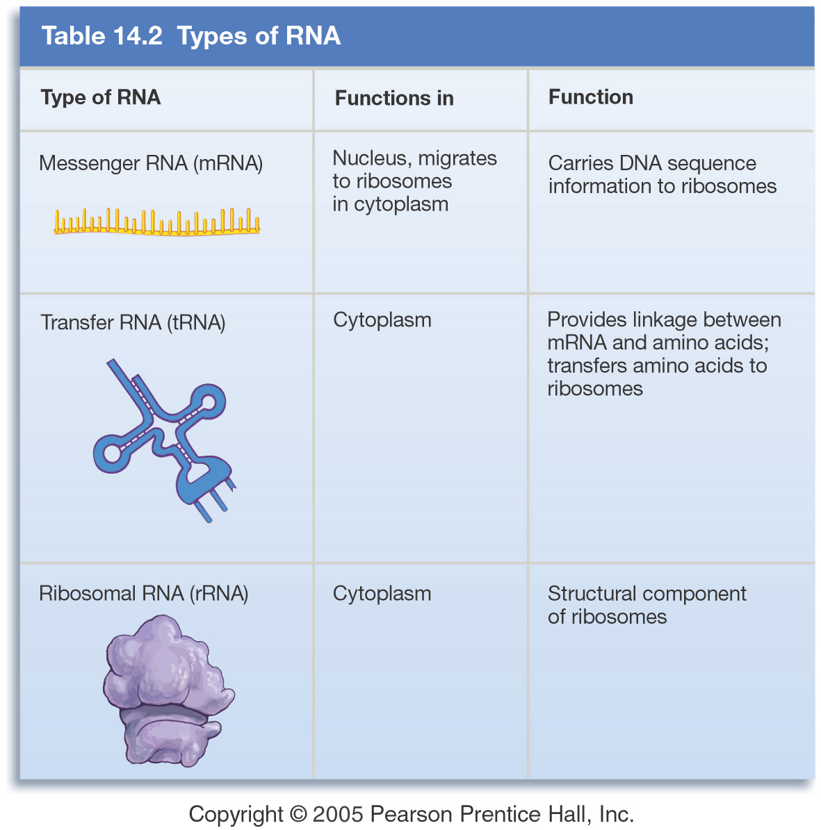 Rna And Protein Synthesis Pptx On Emaze