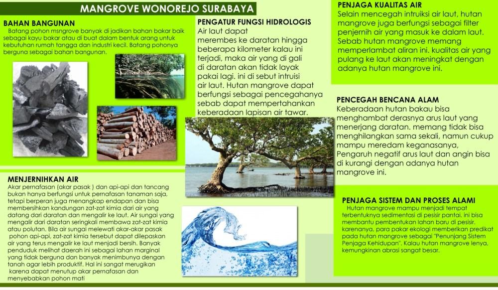 medium resolution of ekowisata mangrove wonorejo surabaya