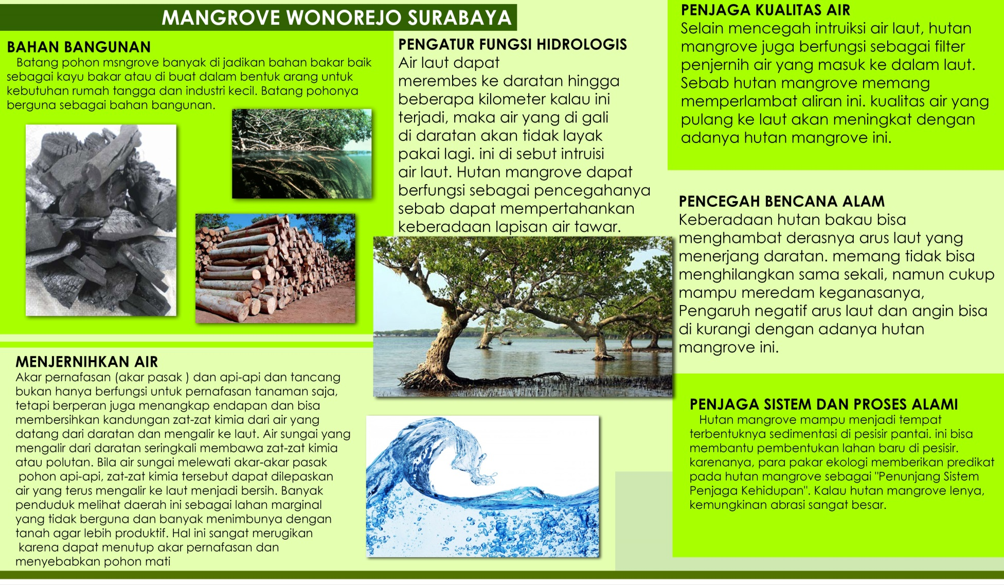 hight resolution of ekowisata mangrove wonorejo surabaya
