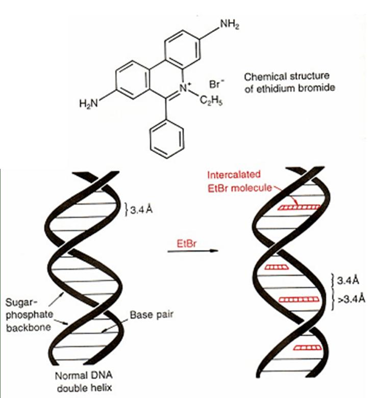 Medical Genetics3.pptx on emaze