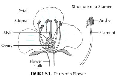 Angiosperm on emaze
