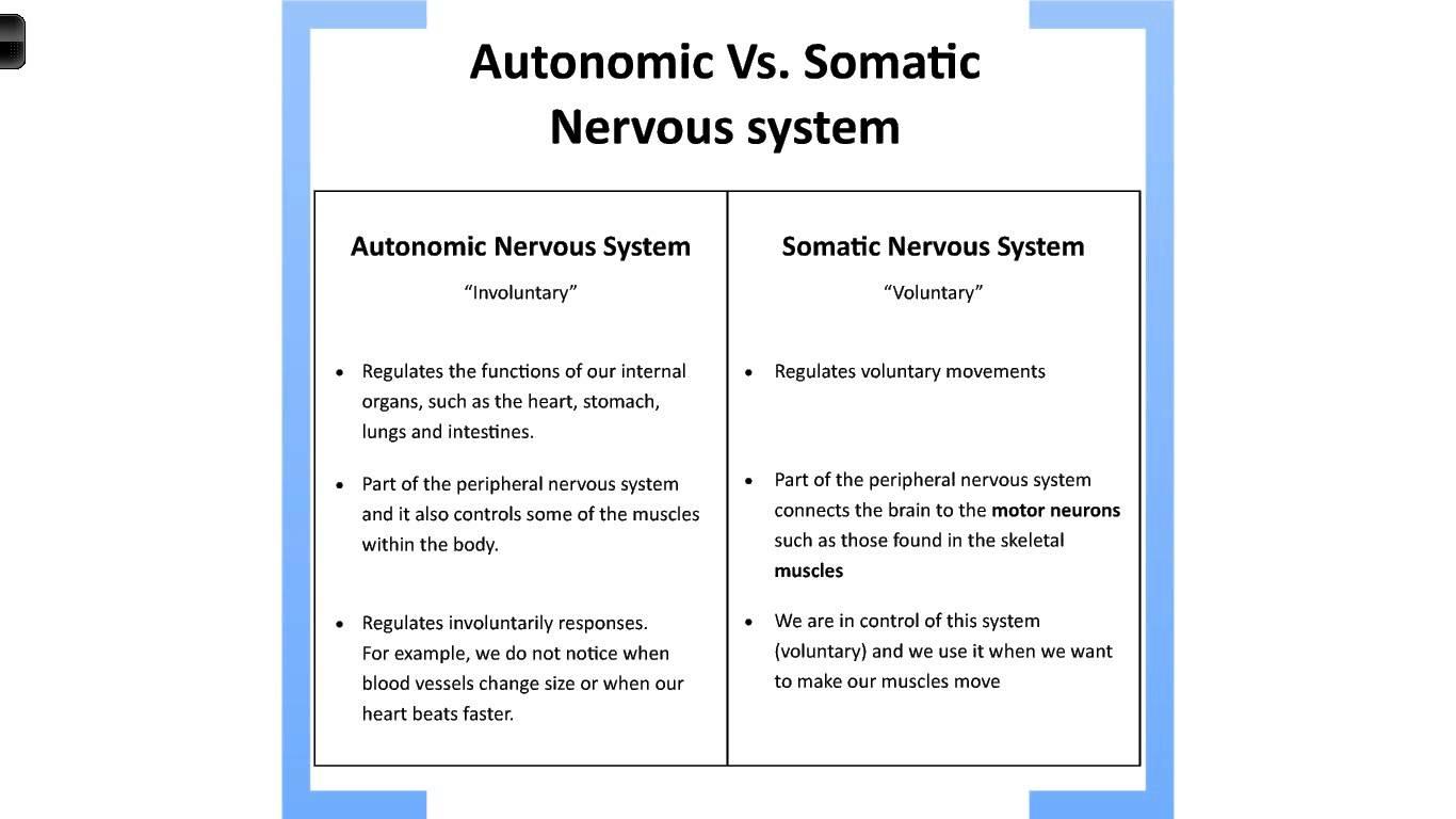 Nervous System On Emaze