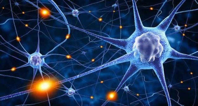 Risultati immagini per neurone